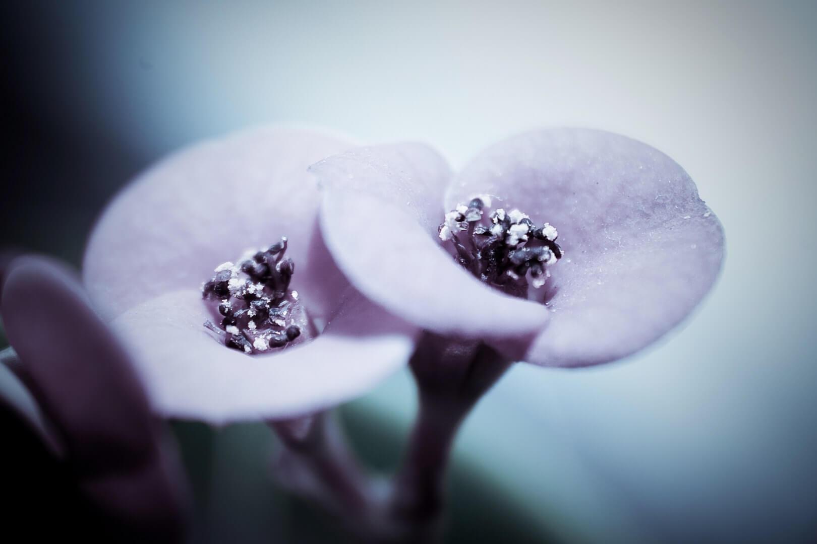 plant-flower-macro_1620x1080